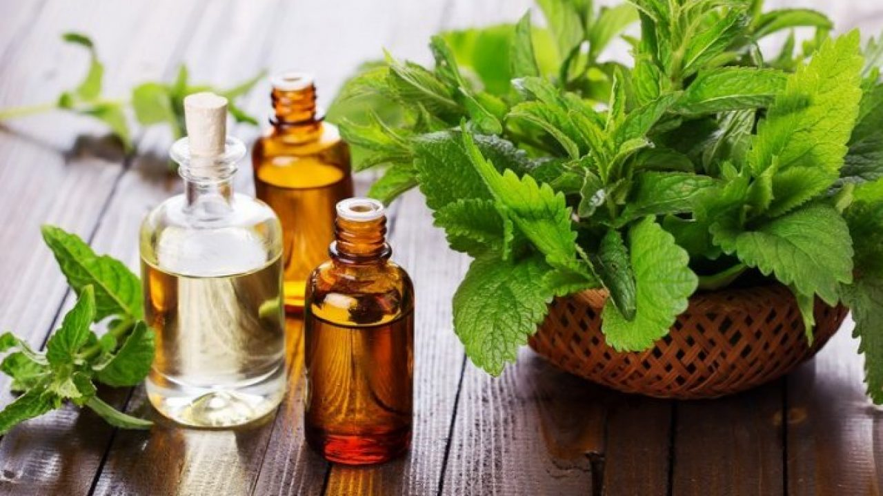 manfaat minyak nilam untuk parfum